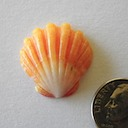 Sunrise Shell 057 400 ~ 65.00